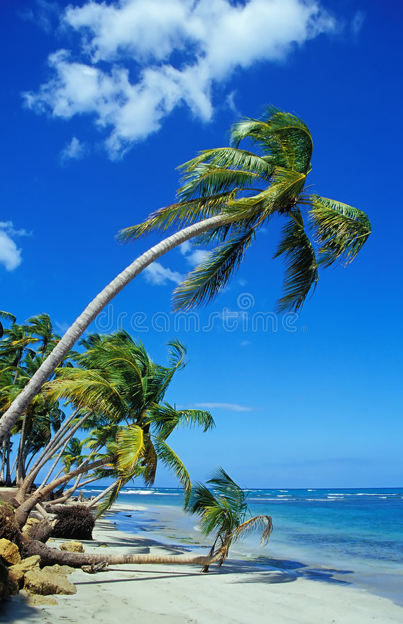 Beautiful Beach with Palm Trees stock images