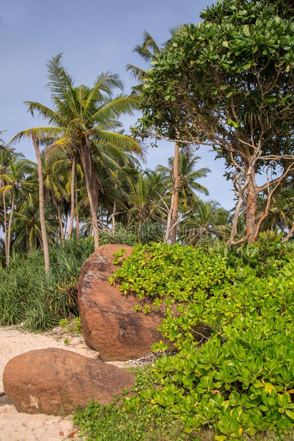 Beautiful beach with palm trees and boulders on the tropical island of Sri Lanka. Vertical stock images