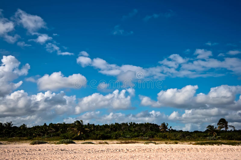 Download Beautiful beach and palms stock photo. Image of romantic - 12803294