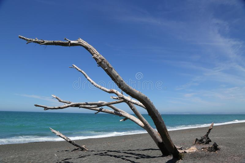Beautiful beach scenery shot on Marine parade in Napier city in Hawkes Bay royalty free stock images