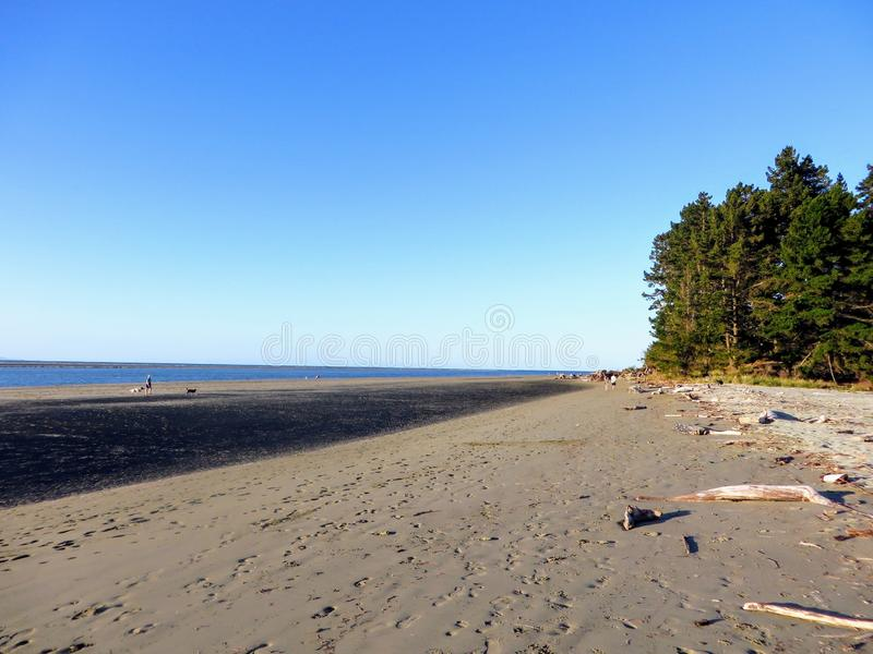 A beautiful beach view in Westport, New Zealand. It is a sunny day with blue sky. There is a small collection of trees royalty free stock images
