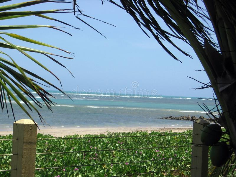 Beautiful beaches of Serrambí north Brazil. Southamerica royalty free stock photography