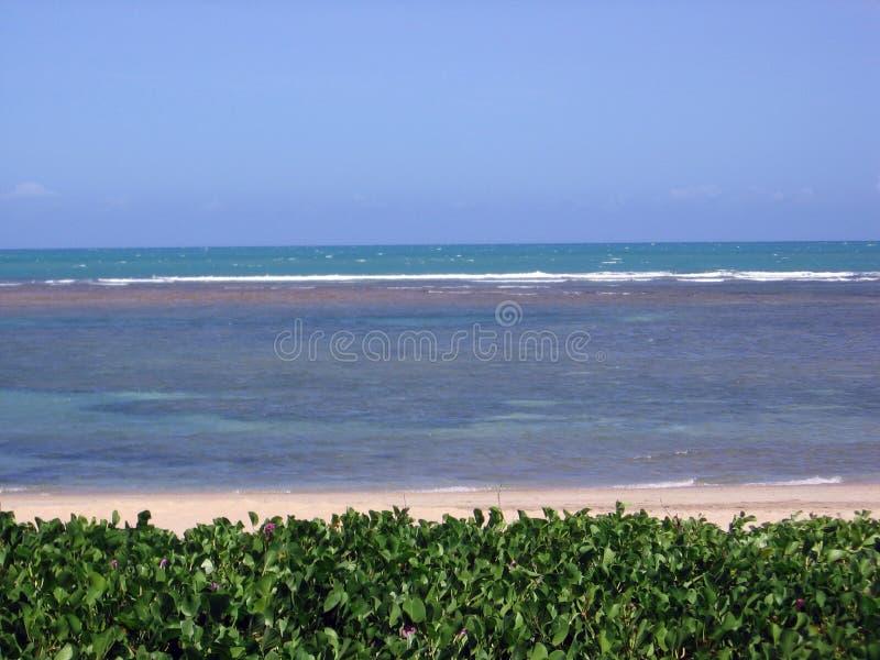 Beautiful beaches of Serrambí north Brazil. Southamerica stock photo