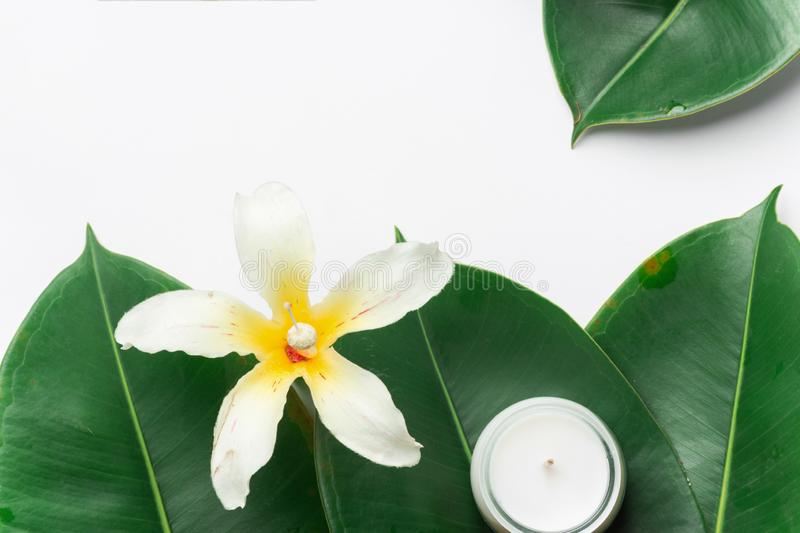 Beautiful big green ficus leaves tropical flower candle white background. Organic Cosmetics Wellness spa body care stock photos