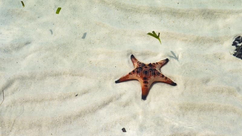 Beautiful big red starfish on the hand,starfish amazing structure on the Phu quoc island, stock photos