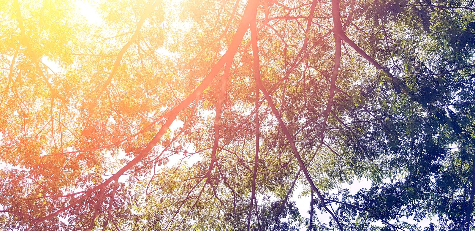 Beautiful big tree branch with green leaves and orange sunlight flare for background stock photo