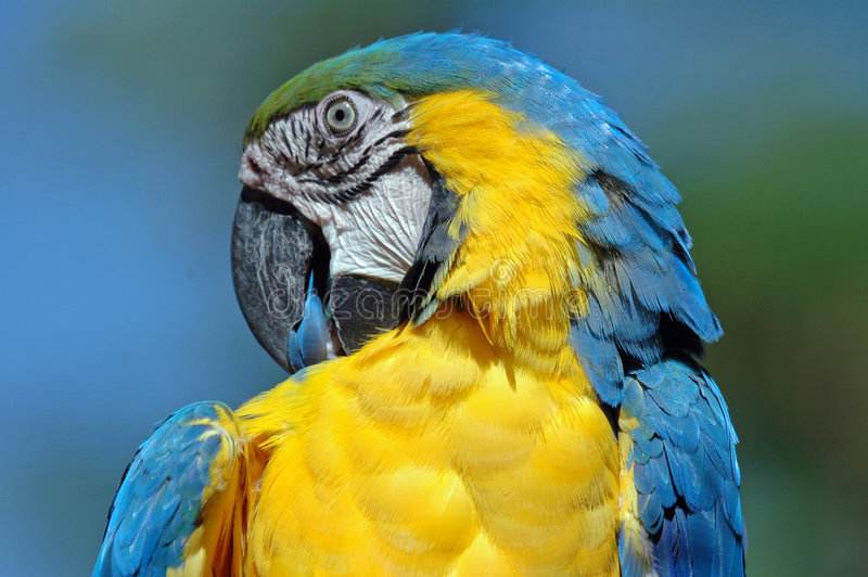 Download Beautiful Bird. Stock Photo - Image: 1499640