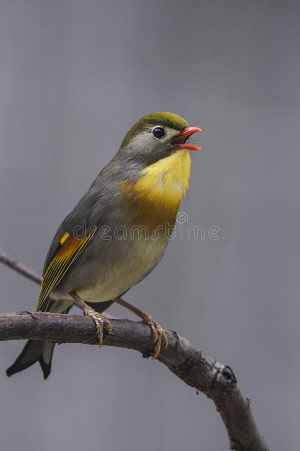 beautiful bird стоковая фотография rf