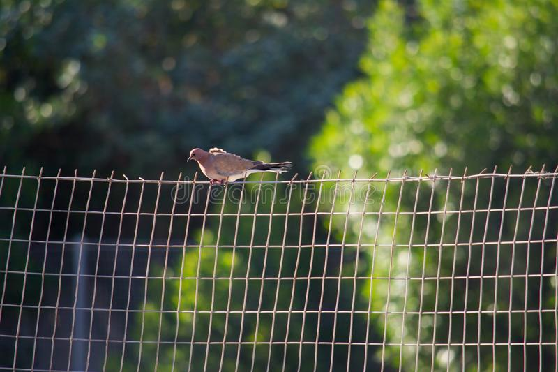 Beautiful Bird is in Bahrain stock images