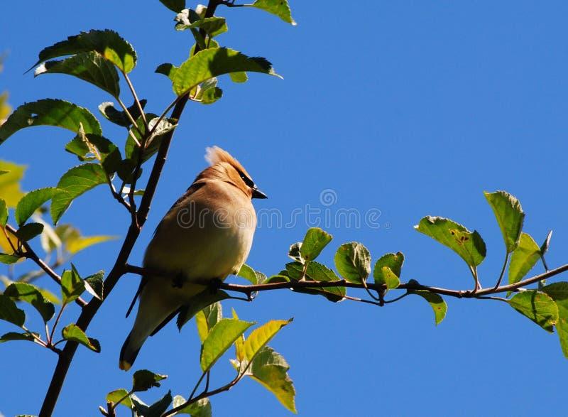 Download Beautiful Bird On A Beautiful Day Stock Photo - Image: 14860362