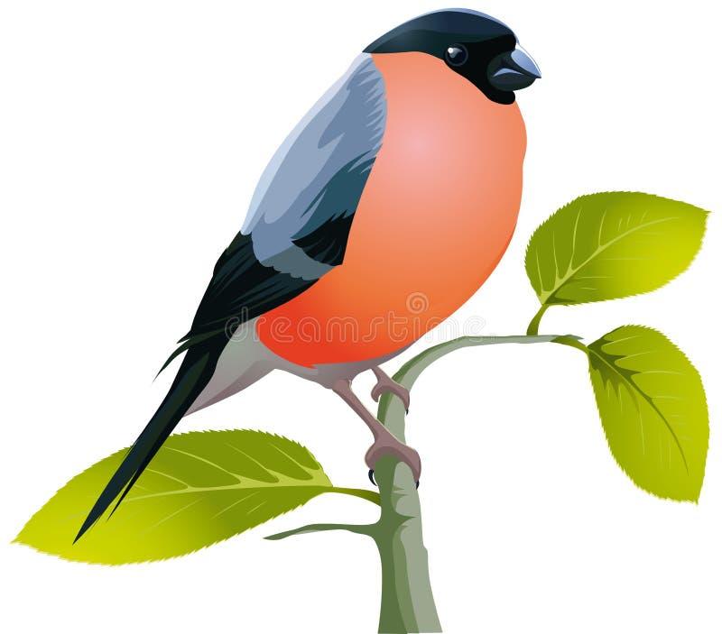 Beautiful bird bullfinch vector illustration
