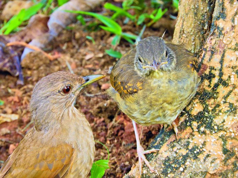 Beautiful bird feeding your puppy in nature stock photos