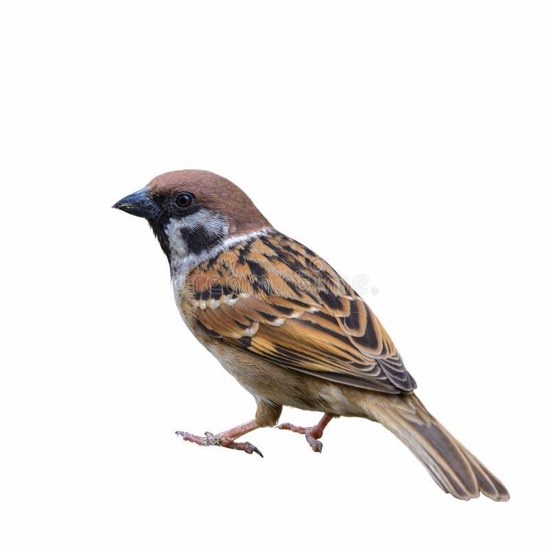 Free Beautiful Bird Isolated. Stock Image - 86582691