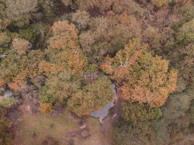 Beautiful bird`s eye view drone landscape image during Autumn Fall of vibrant forest woodland stock photos