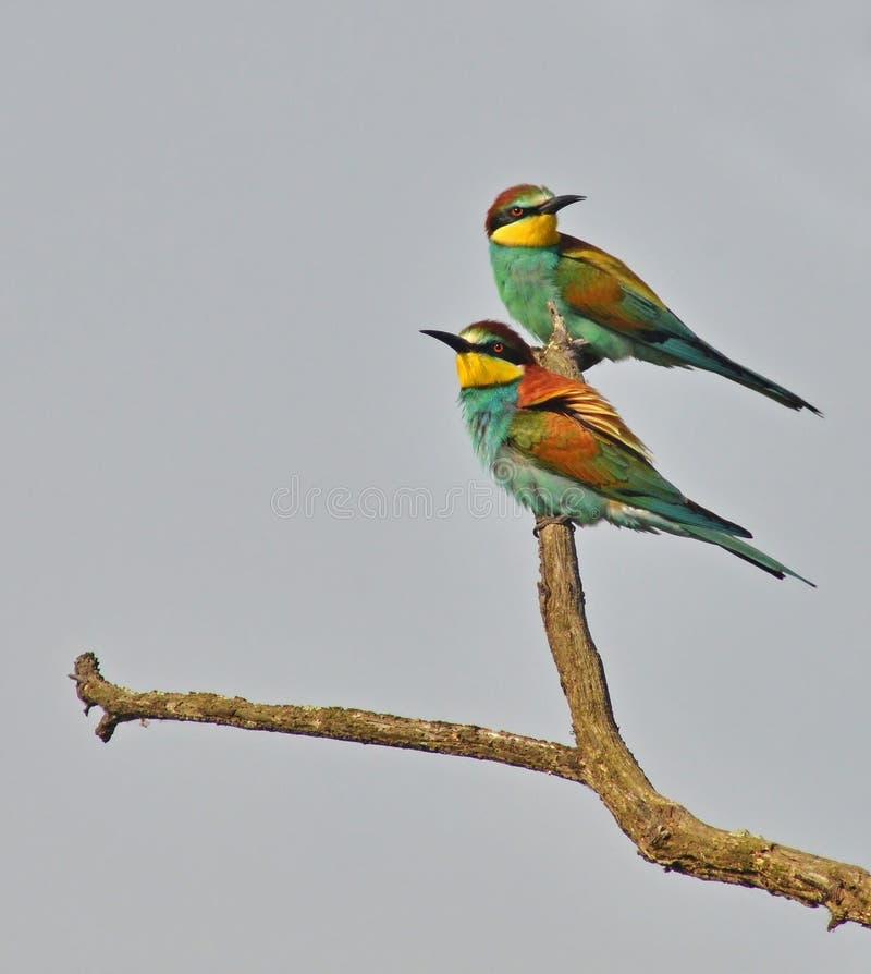 Beautiful birds portrait royalty free stock photography