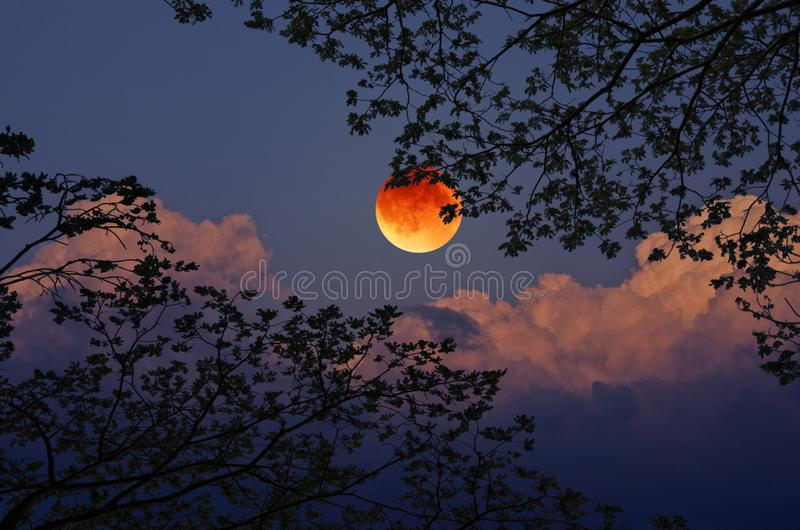 Black branches and leaves with blood moon. Beautiful black branches and leaves with full moon and bright clouds in blue sky royalty free stock photography