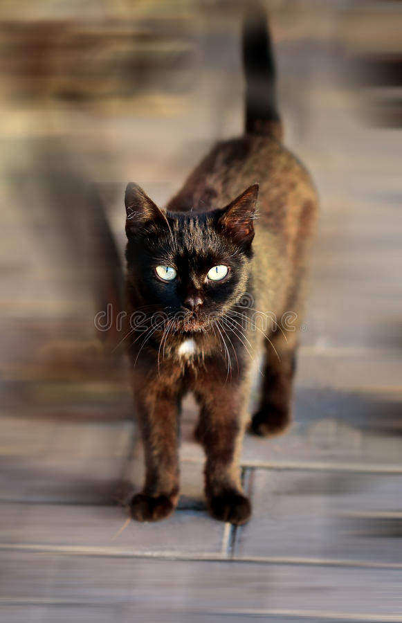 Beautiful black cat. Photographed in close up royalty free stock image