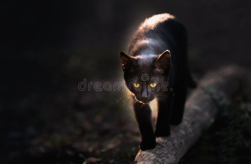 Beautiful black cat walking down the street. Black cat walking down the street royalty free stock photography
