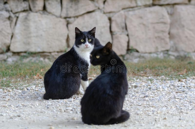 Beautiful black cats sitting on the street. One of them is looking at the camera royalty free stock images
