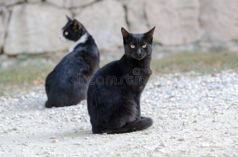 Beautiful black cats sitting on the street. One of them is looking at the camera stock image