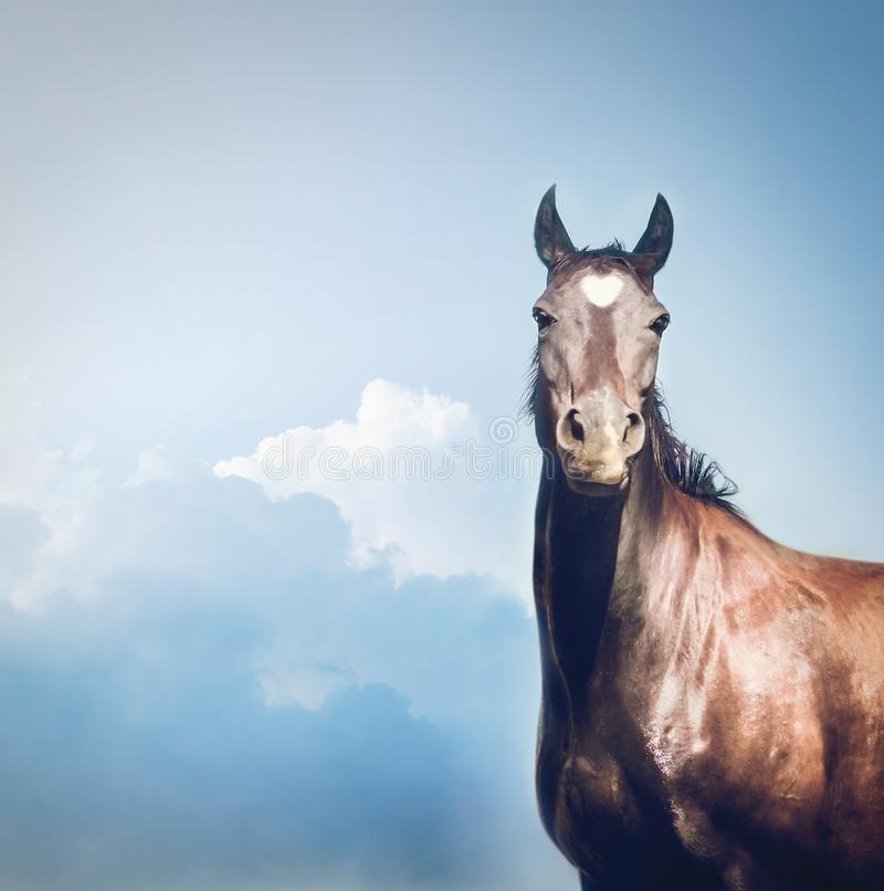 Beautiful black Horse with white heart on forehead at sky stock photos