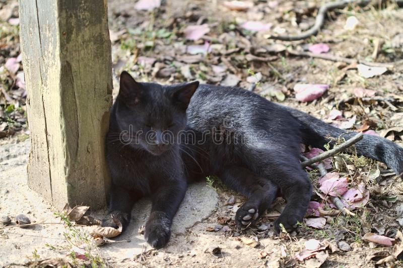 Beautiful Black Kitty Cat with Green eyes. This is a beautiful black kitty cat with green eyes taking his rest by a post for a head rest royalty free stock images