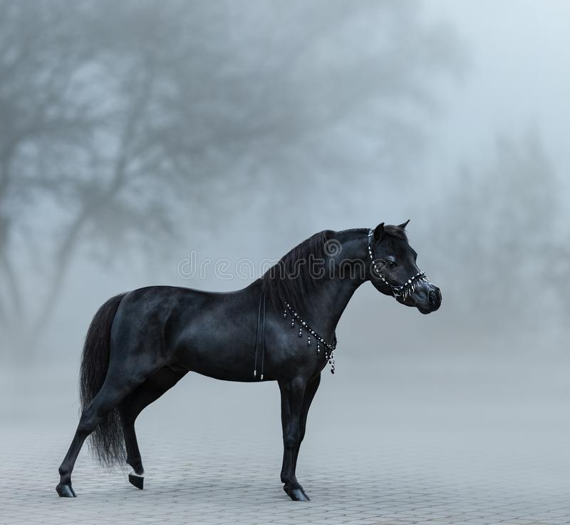 Beautiful black miniature horse standing in fog. royalty free stock photography