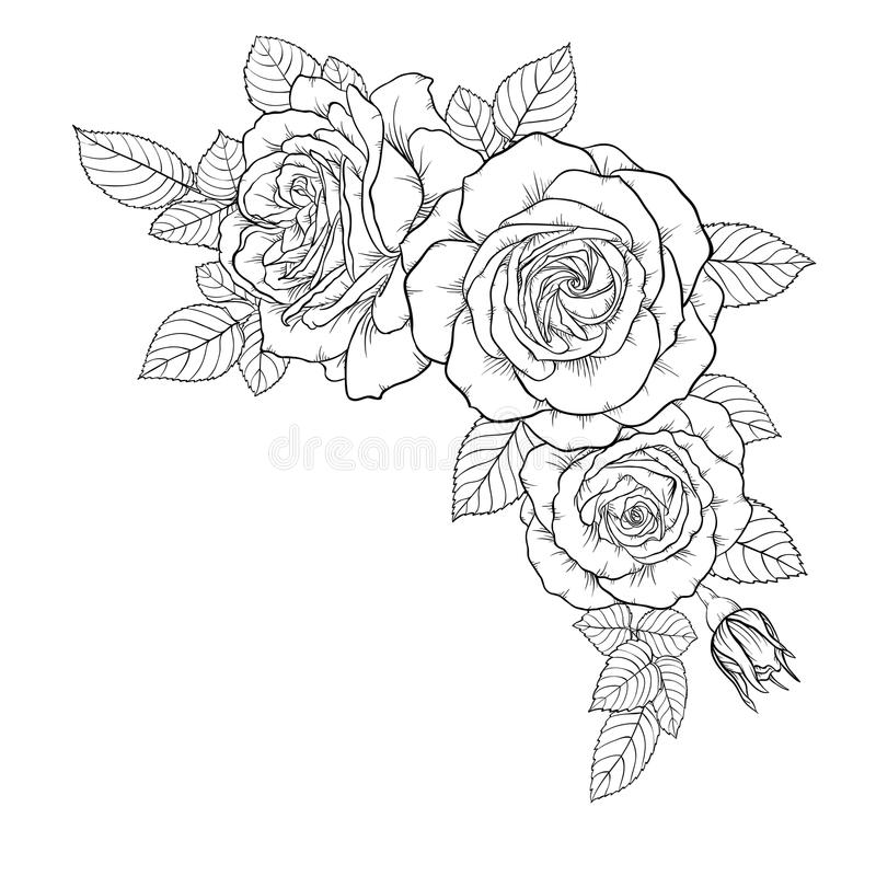 Beautiful black and white bouquet rose and leaves. Floral arrangement isolated on background. design greeting card and invitation vector illustration