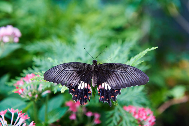 Beautiful black and white butterfly perched on a leaf. Amidst ink flowers stock images