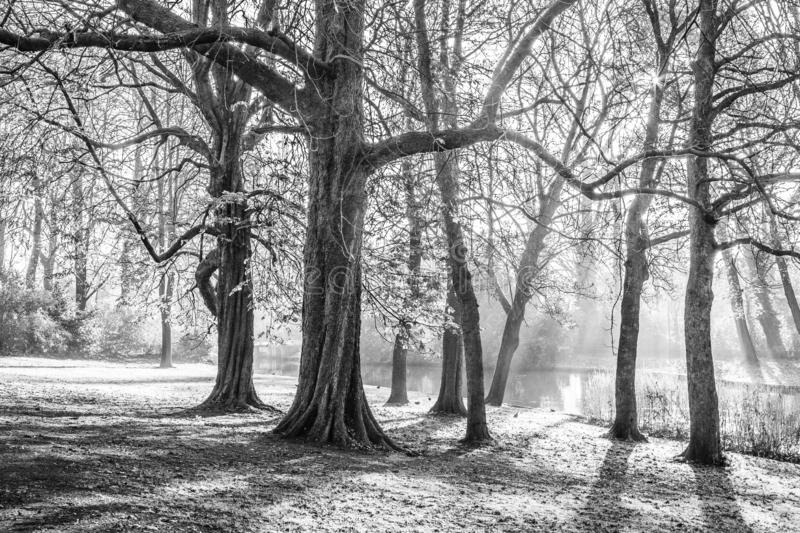 Beautiful black and white picture of trees with sparse haze. And a river in wonderful day in the city of Bruges Belgium stock photo