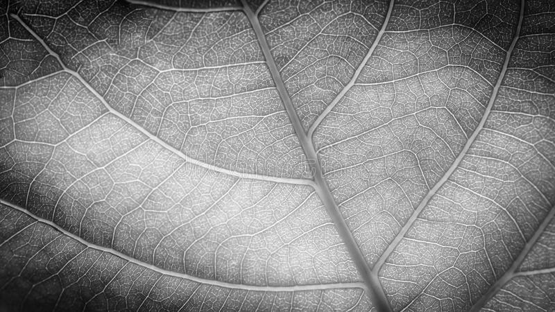 Beautiful black and white process leaf banner design stock photography