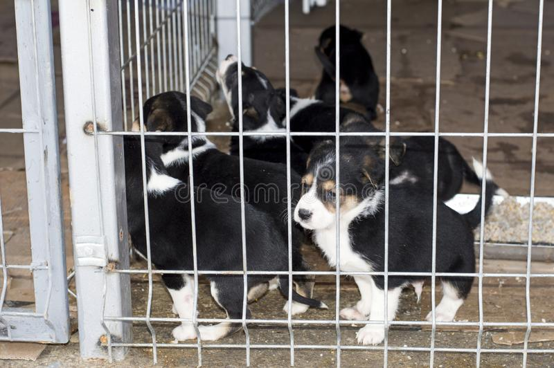Beautiful black and white puppies in the shelter cage royalty free stock photo