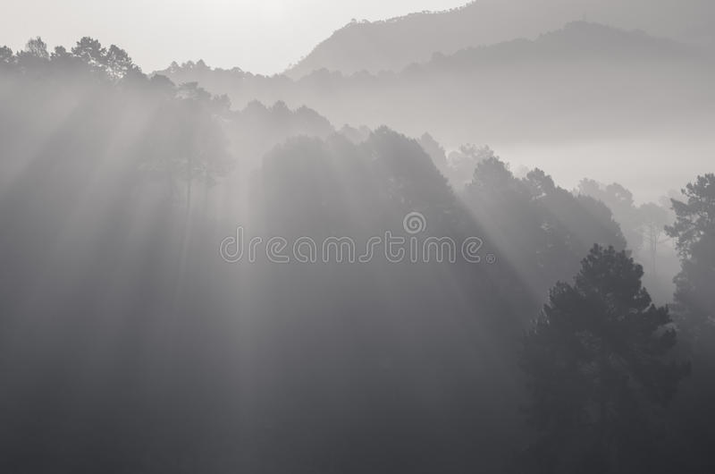 Beautiful black and white ray of light royalty free stock photography