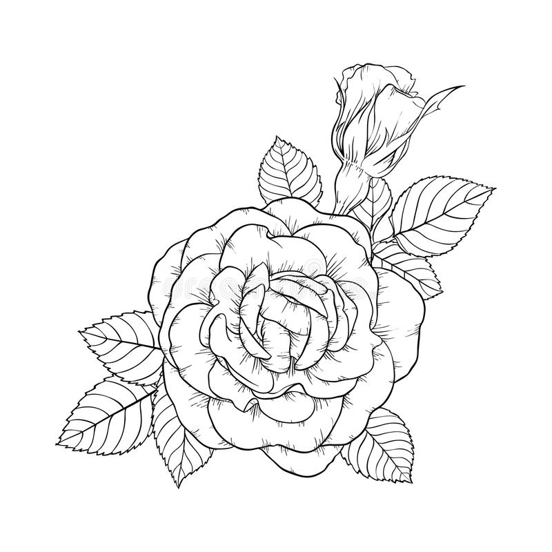 It's just an image of Gratifying Rose Leaf Drawing
