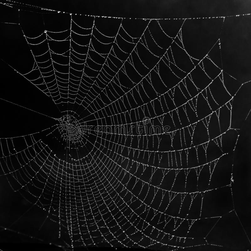 Beautiful black and white spider web, completely covered with frost droplets. Beautiful huge black and white spider web, completely covered with frost droplets royalty free stock photo