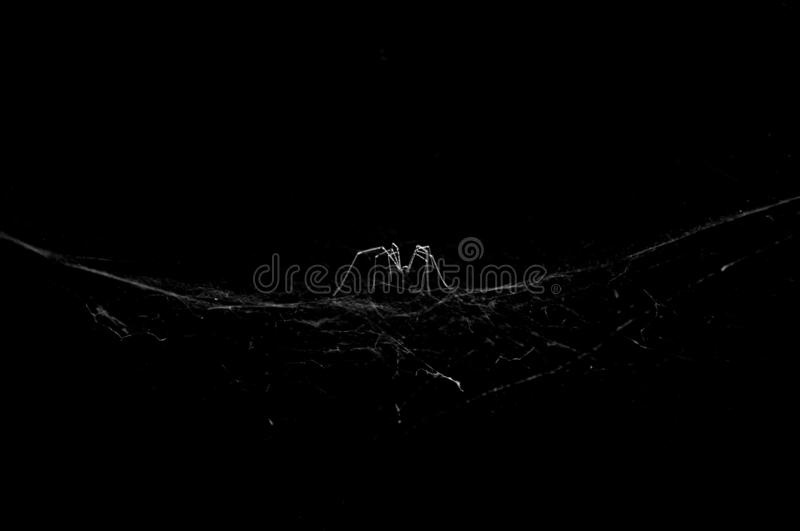 Beautiful black and white spider on the web stock photo