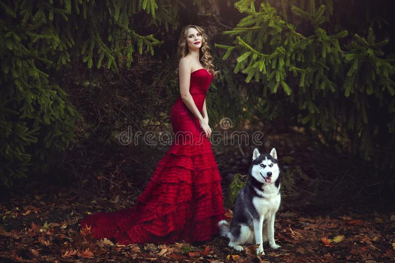 A beautiful blonde girl in a chic red dress, walking with a husky dog in an autumn forest. Fantastic atmospheric photos. stock photography