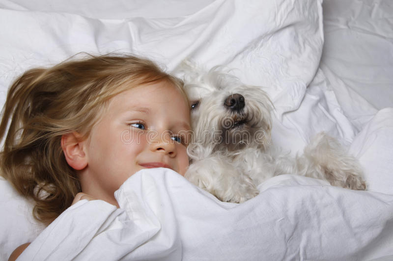Beautiful blonde little girl laughing and lying with white schnauzer puppy dog on white bed. Friendship concept. stock image