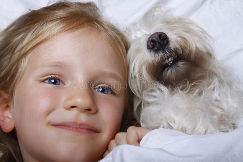 Beautiful blonde little girl laughing and lying with white schnauzer puppy dog on white bed. Friendship concept. royalty free stock photos