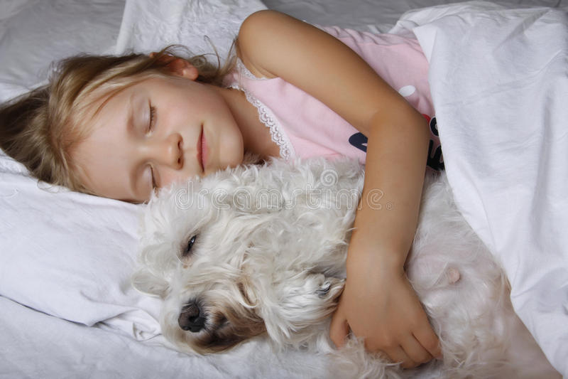 Beautiful blonde little girl sleeping with white schnauzer puppy dog on white bed. Friendship concept. Beautiful blonde little girl sleeping with white stock image