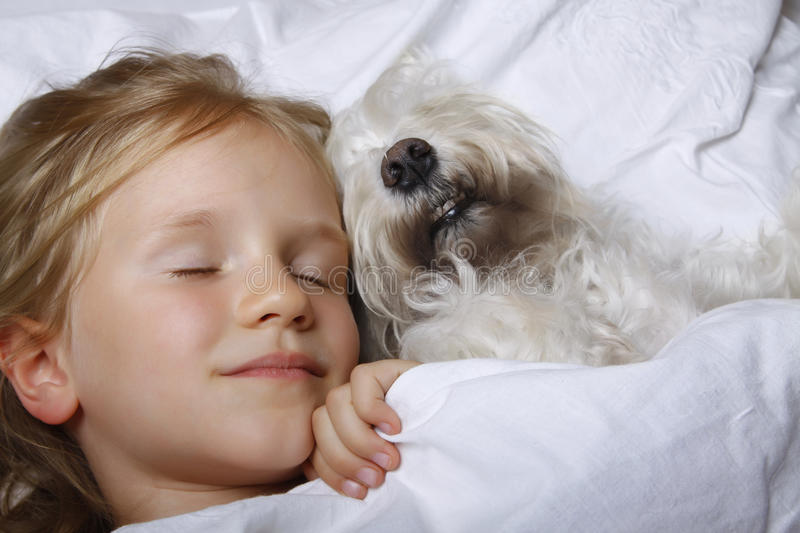 Beautiful blonde little girl sleeping with white schnauzer puppy dog on white bed. Friendship concept. royalty free stock photos
