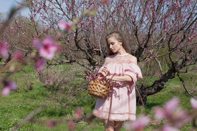 Beautiful blonde woman in a flowered Peach Garden in spring with pink flowers royalty free stock photos