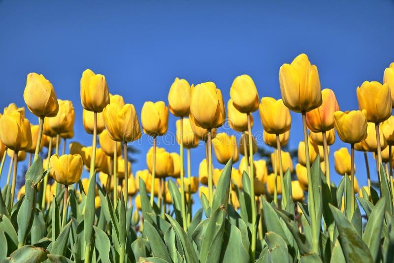 Beautiful, Bloom, Blooming royalty free stock photo