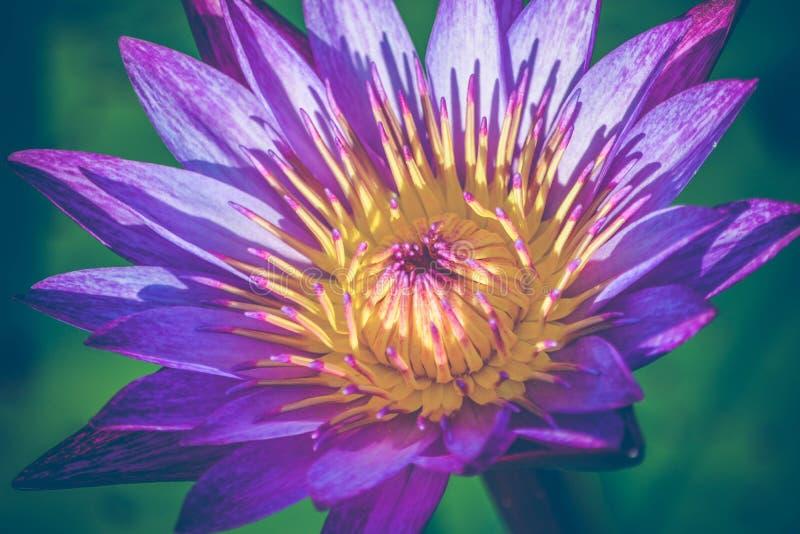 Beautiful, Blooming, Botanical stock photo