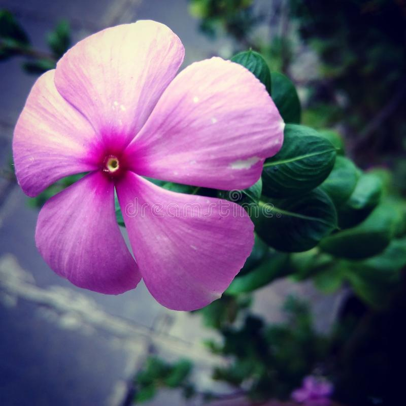Beautiful blooming flower stock photography