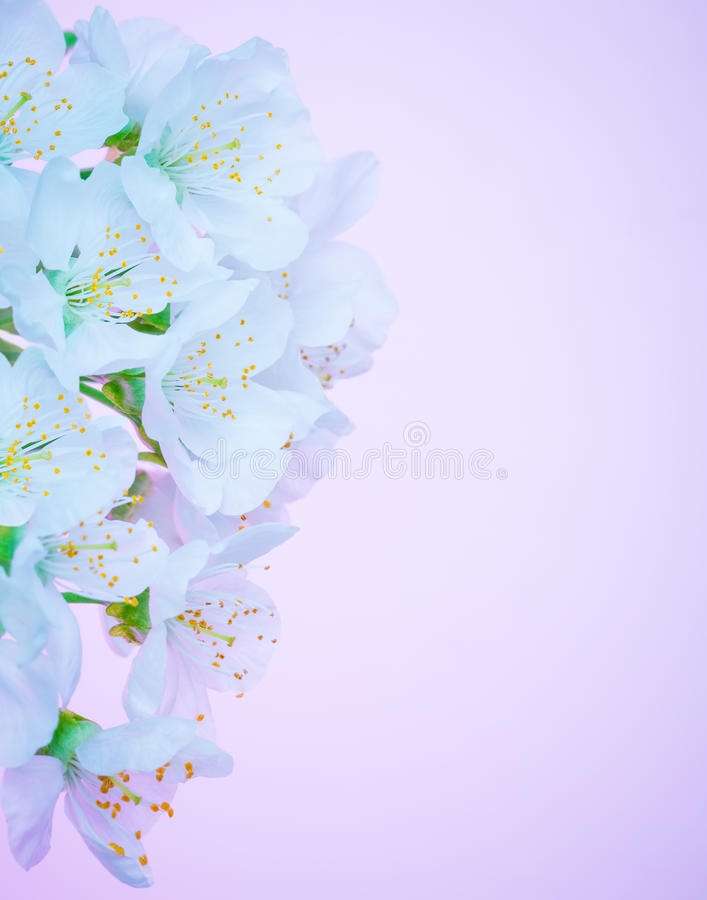 Beautiful blooming flowers border stock images