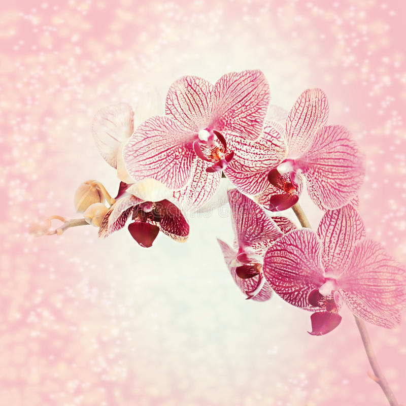 Download Beautiful blooming orchid stock photo. Image of greeting - 42190042