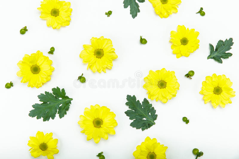 Beautiful blooming small yellow flowers on white stock photos