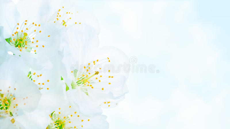 Beautiful blooming spring flowers royalty free stock photos
