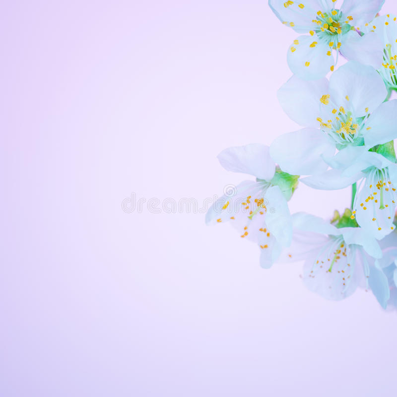 Beautiful blooming spring flowers stock photos